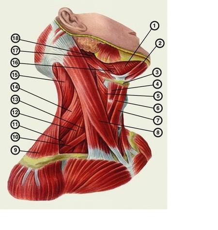 от чего появляются пигментные пятна на спине